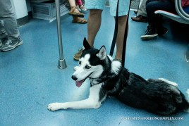 Picture of dog in Rome Metro