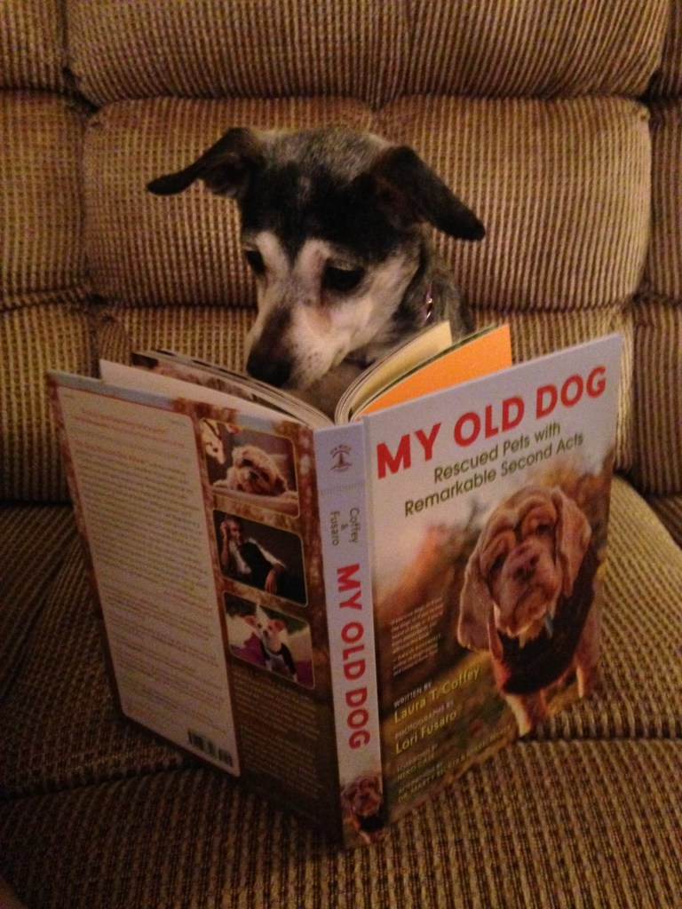 "Mabel the dog reading the ""My Old Dog"" book"