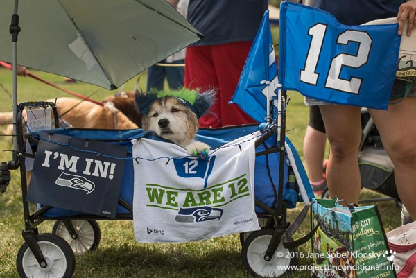 Nico the dog in a Seahawks-themed stroller