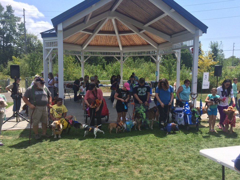 The dogs who got gussied for the Old Dog Pageant start assembling for a group photo.