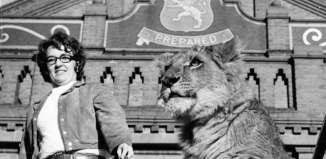 lion at villa park