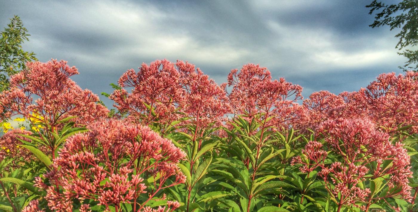 Garden Update August 2016 | via MyOtherMoreExcitingSelf.com #gardenchat #gardening #perennialflowers