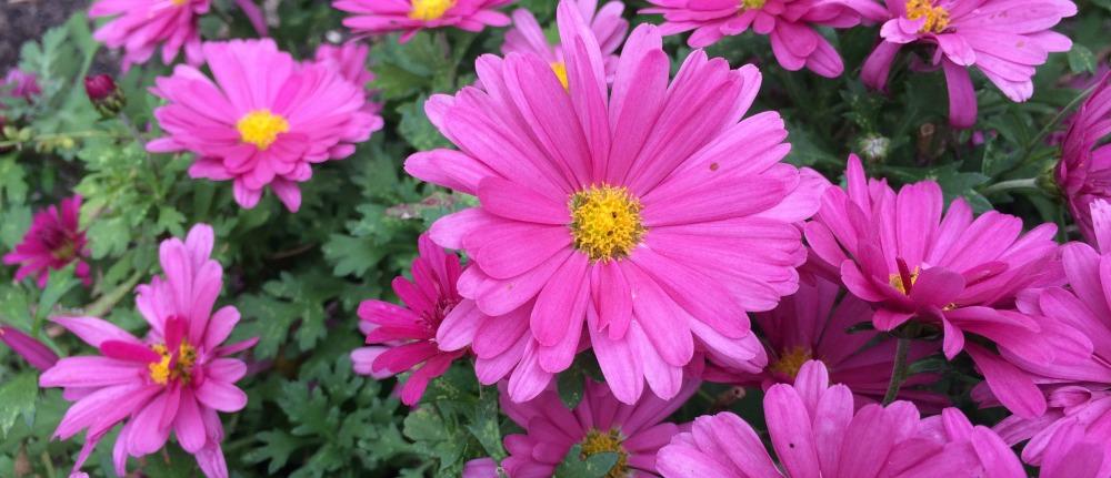 Weekend Snaps | Last Look at Garden Color via MyOtherMoreExcitingSelf.com