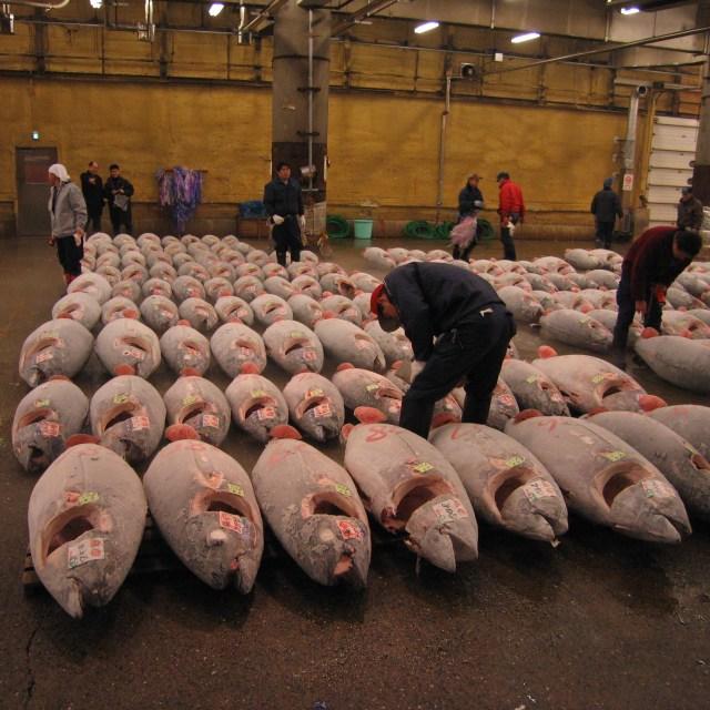 Tsukiji_Fish_market_and_Tuna