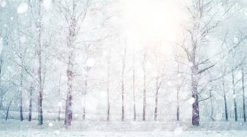 winter-snow-forest-1080p