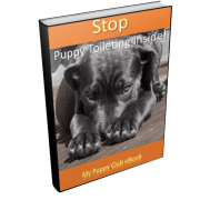 Stop my puppy using my home as a toilet!