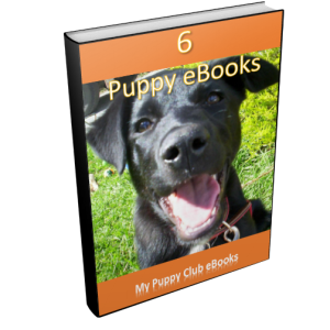 Complete guide for puppy training