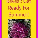 May Theme Reveal: Get Ready For Summer