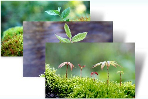 Windows Themes For Earth Day: From Saplings, To Fauna For Your Desktop