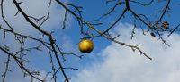 Der goldene Apfel beim Kühnhofer Anger
