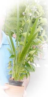 MollathPflanzeWEBKlein