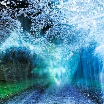 【Art Streaming】Vol.1 岩根愛 ✕ 大友良英「あたらしい川をあるく」