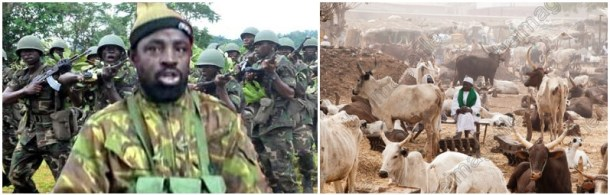 download 1 700x224 Breaking News:  Boko Haram Now Using Cows To Bomb Communities
