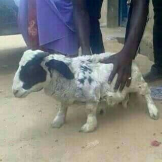 Photo Of The Day:- When You Order For Sallah Ram On OLX