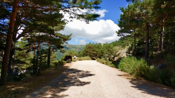 Cercedilla Madrid mountains by Naked Madrid
