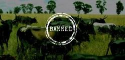 Beef Ban