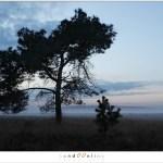 Twilight (1D132365)