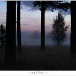 Twilight (1D132396)
