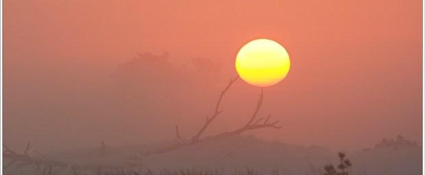 Ondersteund door takken klimt de zon de hemel in