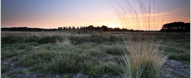 Een Grafheuvel op de Regte Heide (5D301399)
