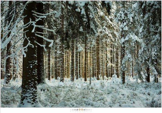 Ardennen - Hautes Fagnes