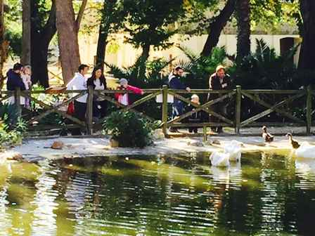 zoo laghetto