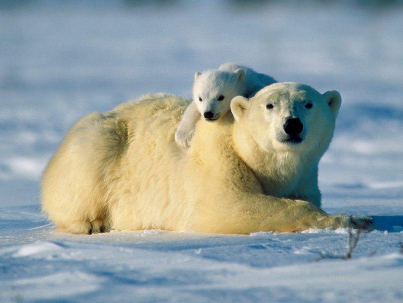 Hayvanlar kışın nasıl yaşar ?