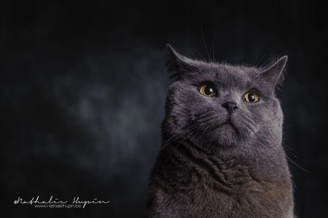 photographe animaux chat namur
