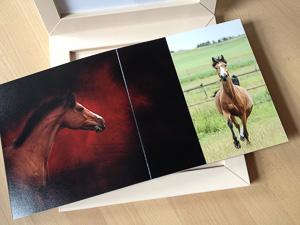 nathaliehupin-babybook-2776