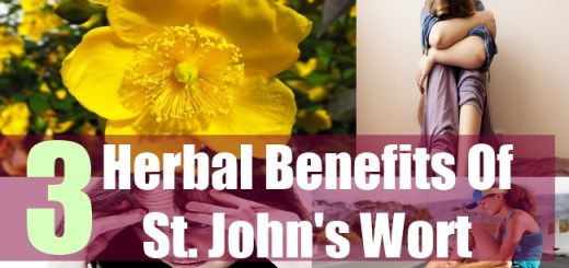 3 Herbal Benefits Of St. John's Wort
