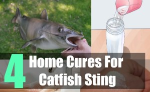 4 Home Cures For Catfish Sting