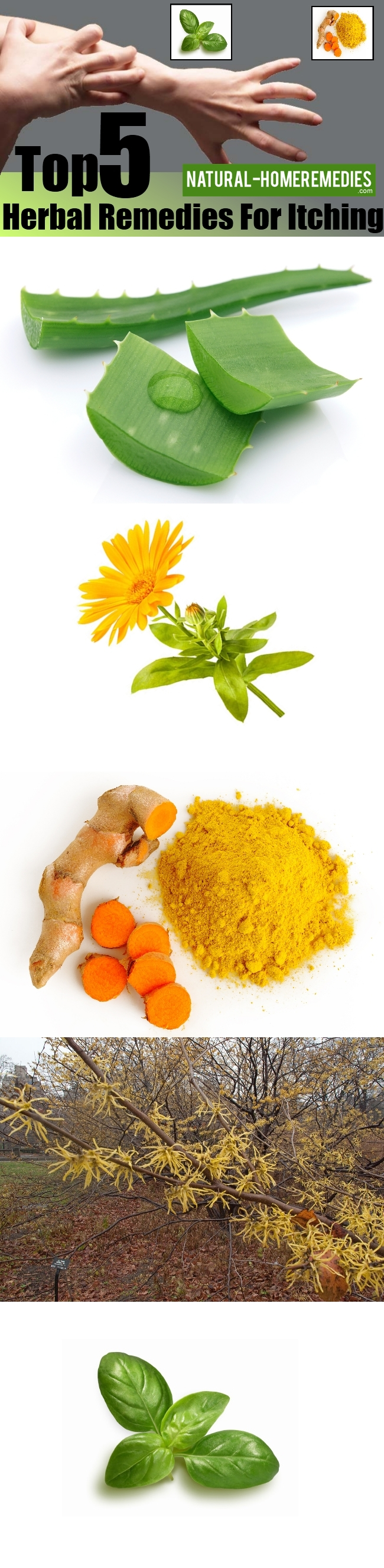 Top 5 Herbal Remedies For Itching