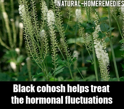 how to take black cohosh for pcos