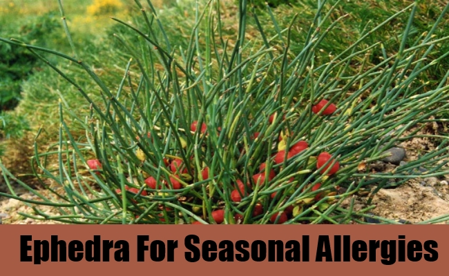 Ephedra For Seasonal Allergies