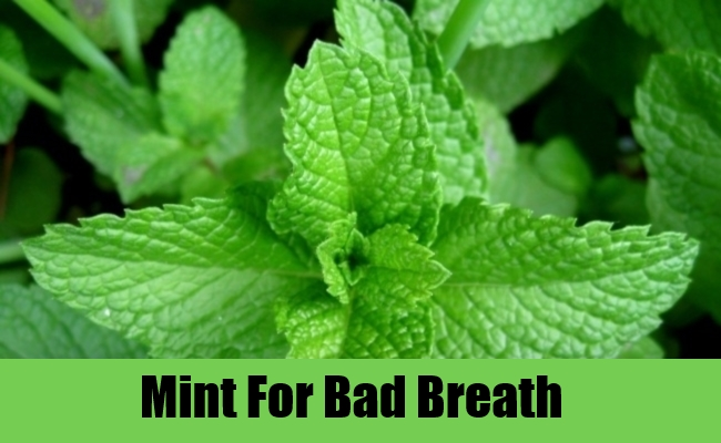 Mint For Bad Breath