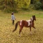 Horse and Owner Training