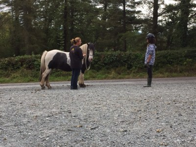 natural horsemanship ireland lessons