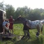 Problem solving using natural horsemanship in Ireland.
