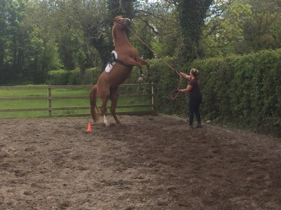 natural horsemanship ireland training