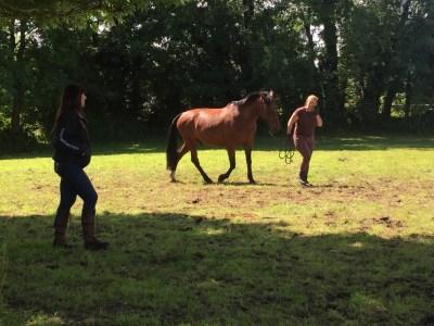 natural horsemanship ireland lessons
