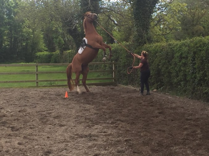 Problem solving using natural horsemanship in Ireland.