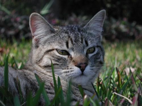 Medium Of Ibs In Cats