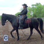 FOSH IJA Western Training 1 flat walk