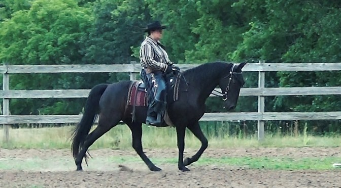 IJA Western Training 2 medium walk