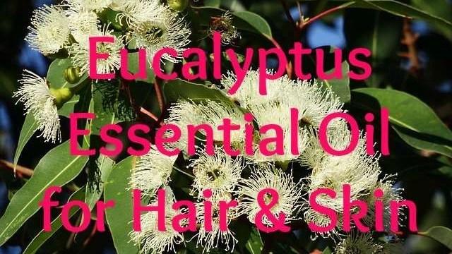 eucalyptus-essential-oil-for-hair-and-skin