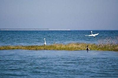 Secretary of Natural Resources - Chesapeake Bay Restoration