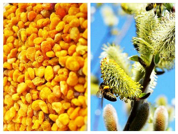 polen-de-salcie-pentru-vedere.jpg