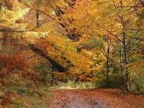 Autumn-colours-at-Grizedale