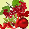 Kringleberry1