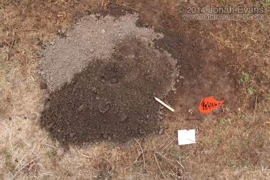 Pocket Gopher Mound